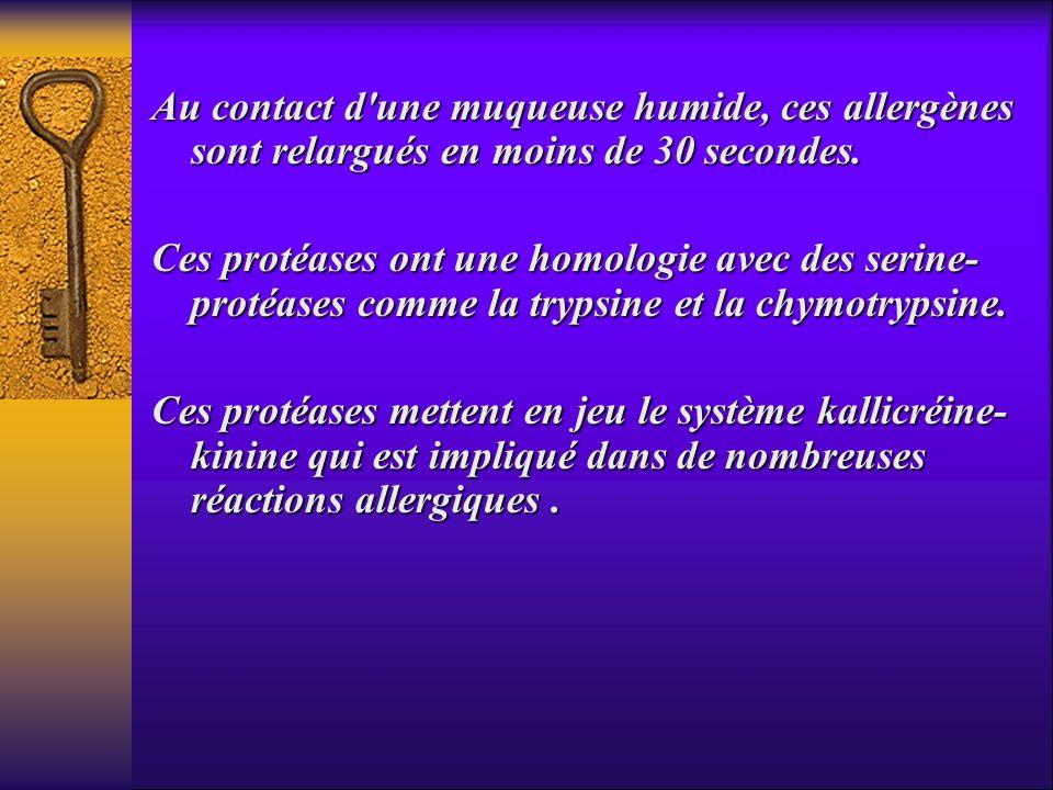 Au contact d'une muqueuse humide, ces allergènes sont relargués en moins de 30 secondes. Ces protéases ont une homologie avec des serine- protéases co