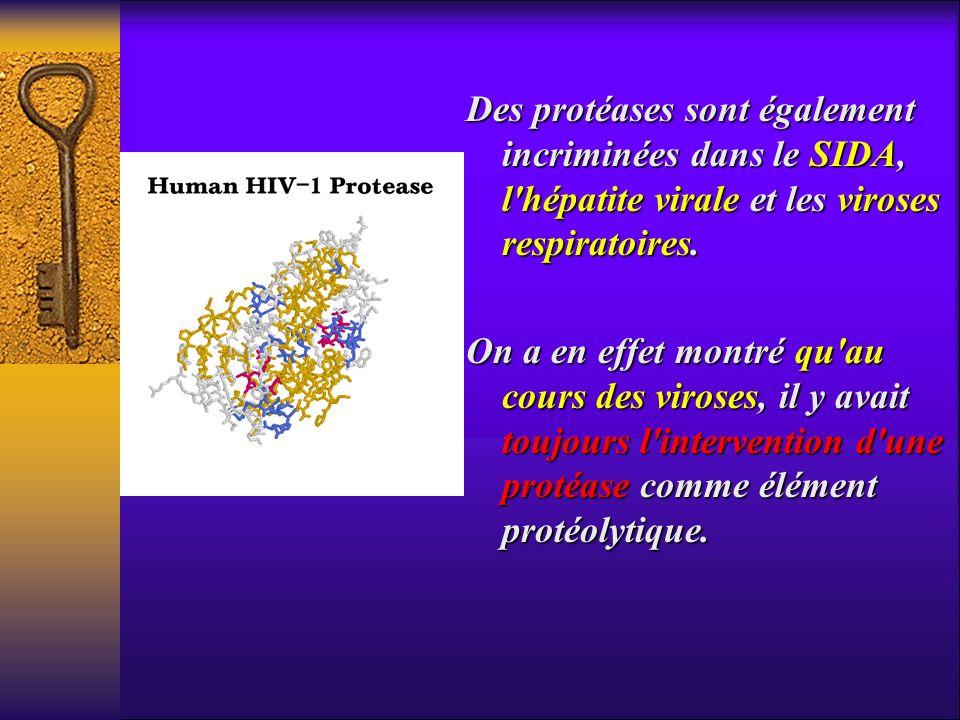 Des protéases sont également incriminées dans le SIDA, l'hépatite virale et les viroses respiratoires. On a en effet montré qu'au cours des viroses, i