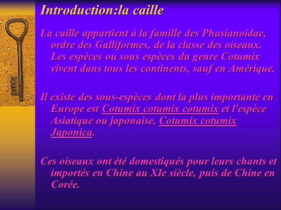 Introduction:la caille La caille appartient à la famille des Phasianoidae, ordre des Galliformes, de la classe des oiseaux. Les espèces ou sous espèce