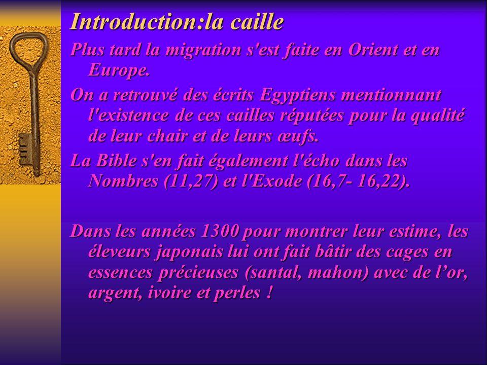 Introduction:la caille Plus tard la migration s'est faite en Orient et en Europe. On a retrouvé des écrits Egyptiens mentionnant l'existence de ces ca