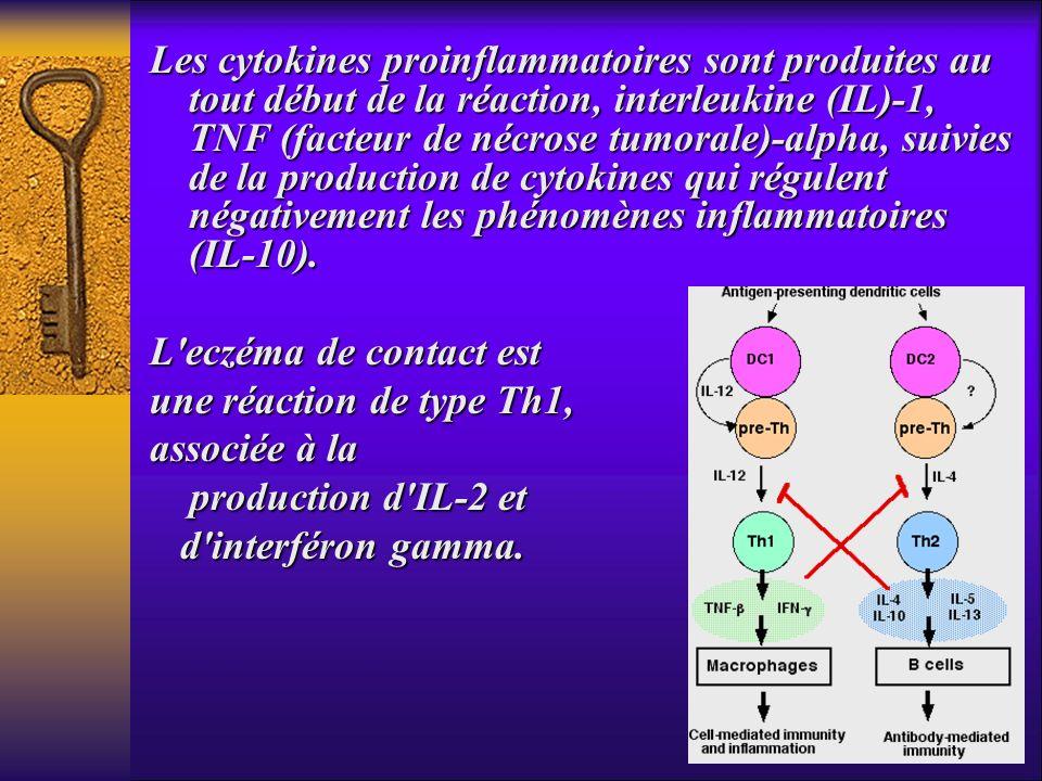 Les cytokines proinflammatoires sont produites au tout début de la réaction, interleukine (IL)-1, TNF (facteur de nécrose tumorale)-alpha, suivies de