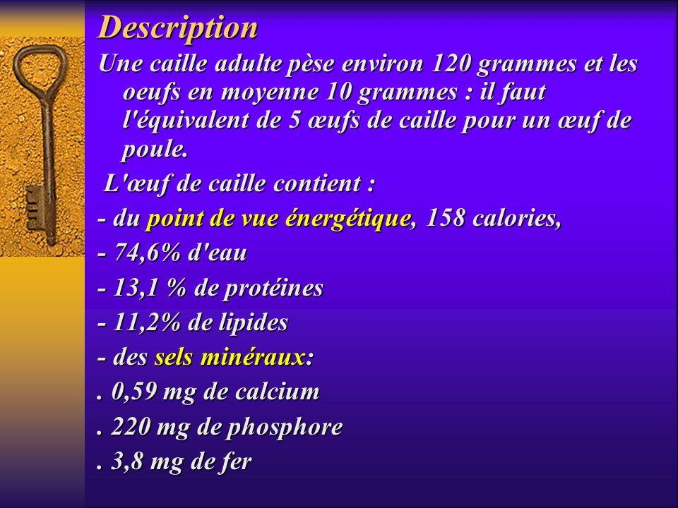 Description Une caille adulte pèse environ 120 grammes et les oeufs en moyenne 10 grammes : il faut l'équivalent de 5 œufs de caille pour un œuf de po