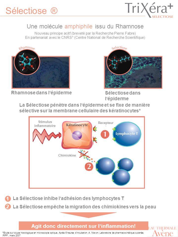 Sélectiose ® Une molécule amphiphile issu du Rhamnose *Etude sur coupe histologique en microscopie optique, Après 6 heures dincubation. A. Mavon, Labo