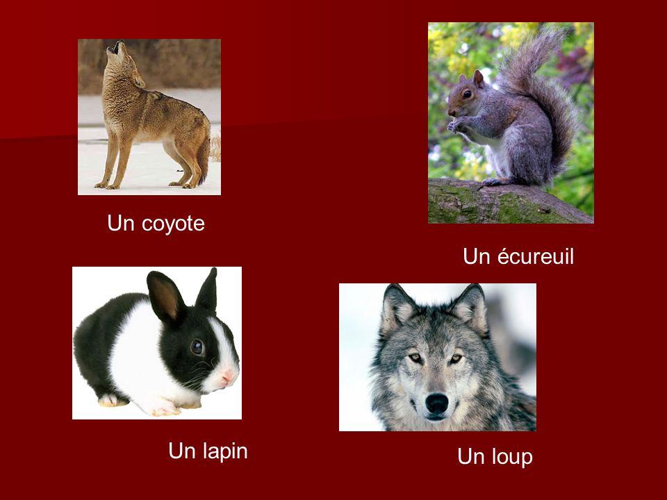 Un coyote Un écureuil Un lapin Un loup
