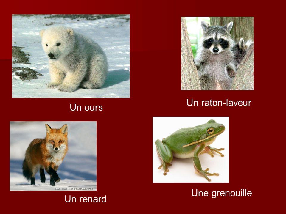 Un ours Un raton-laveur Un renard Une grenouille