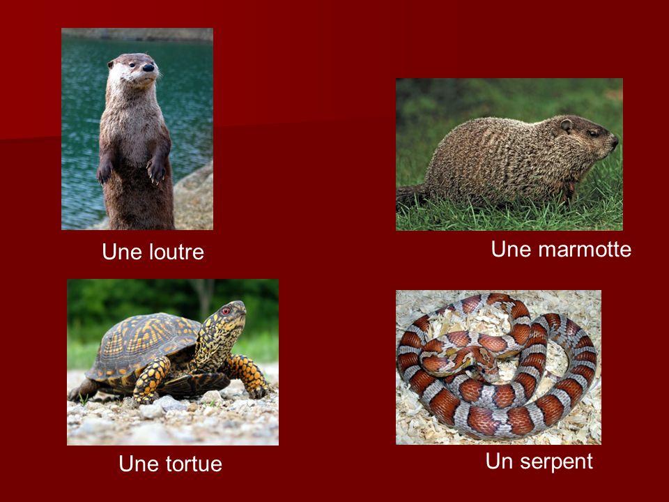 Une loutre Une marmotte Une tortue Un serpent