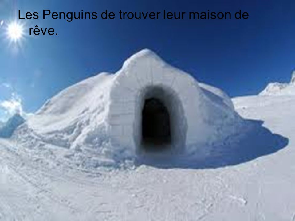 Les Penguins de trouver leur maison de rêve.