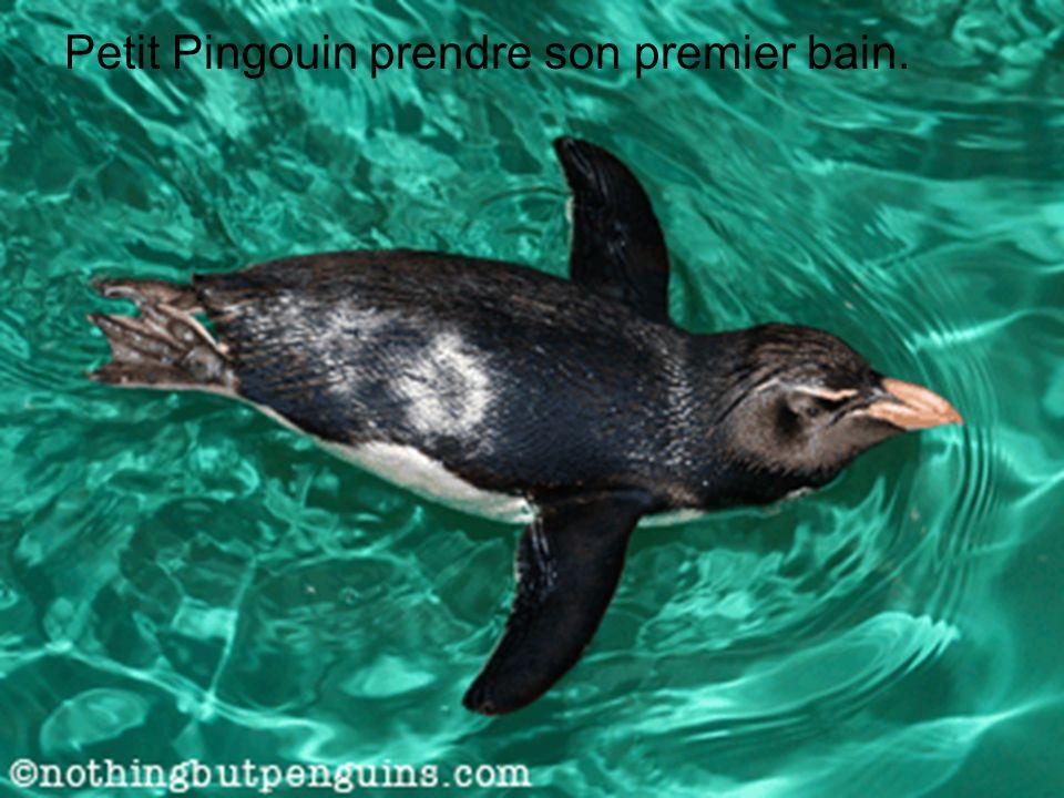 La fin Au revoir Petit Penguin!!!