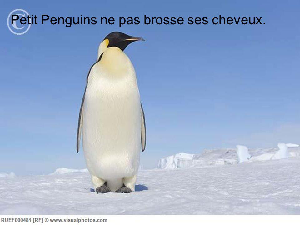 Petit Penguins ne pas brosse ses cheveux.