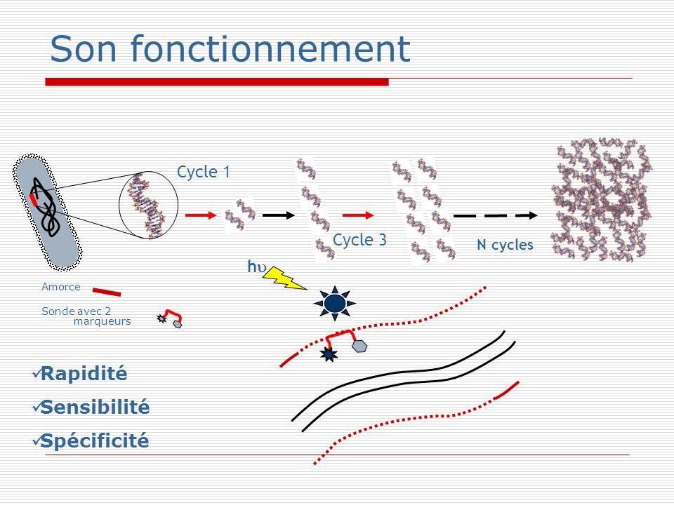Son fonctionnement Amorce Sonde avec 2 marqueurs Cycle 1 h N cycles Cycle 3 Rapidité Sensibilité Spécificité