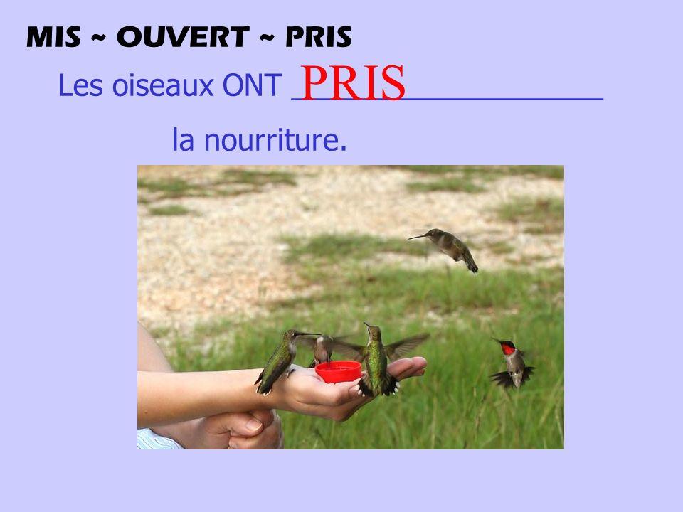 Les oiseaux ONT ___________________ la nourriture. PRIS MIS ~ OUVERT ~ PRIS