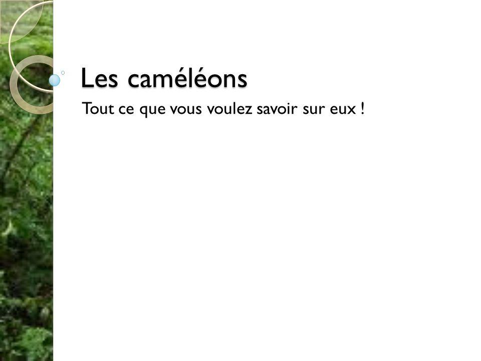 Les caméléons Tout ce que vous voulez savoir sur eux !