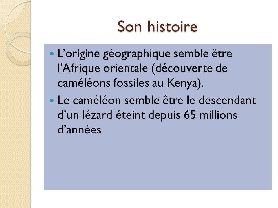 Son histoire Lorigine géographique semble être l Afrique orientale (découverte de caméléons fossiles au Kenya).