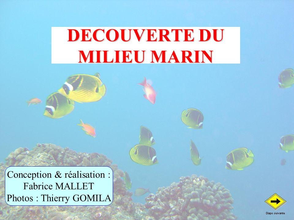 DECOUVERTE DU MILIEU MARIN Conception & réalisation : Fabrice MALLET Photos : Thierry GOMILA