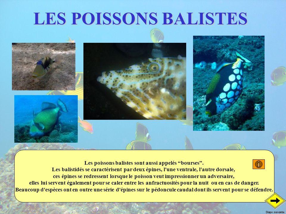 LES POISSONS BALISTES Les poissons balistes sont aussi appelés bourses. Les balistidés se caractérisent par deux épines, l'une ventrale, l'autre dorsa
