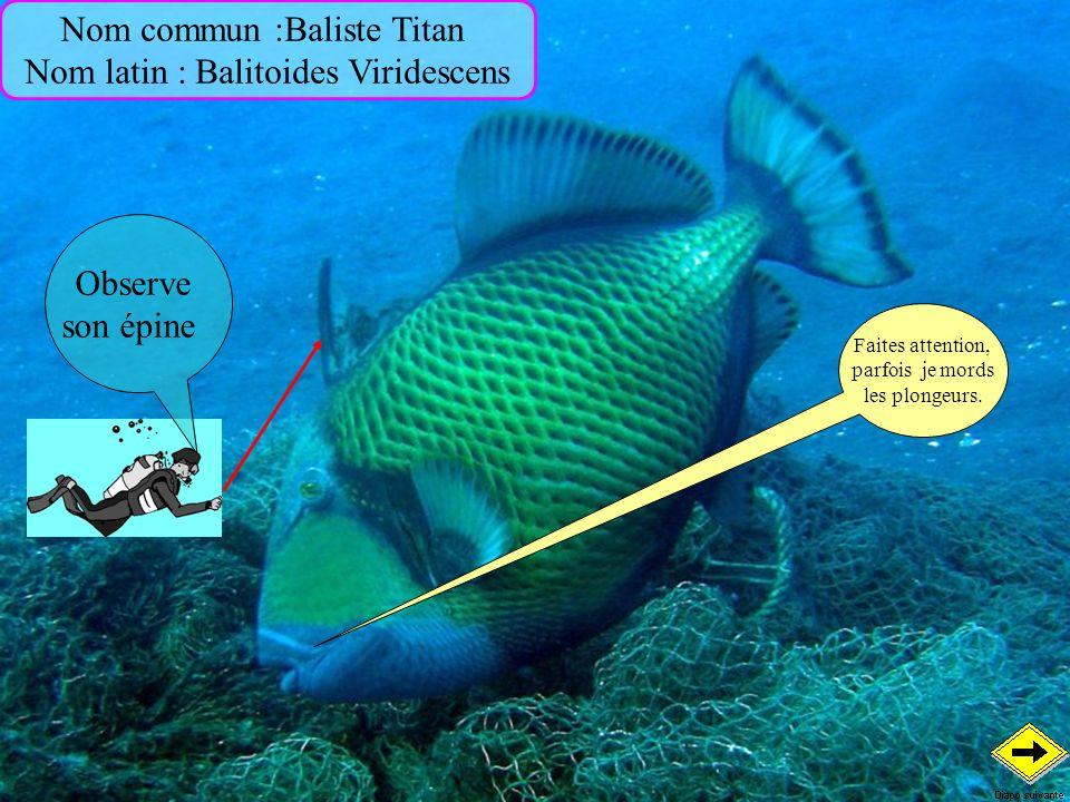 Nom commun :Baliste Titan Nom latin : Balitoides Viridescens Observe son épine Faites attention, parfois je mords les plongeurs.
