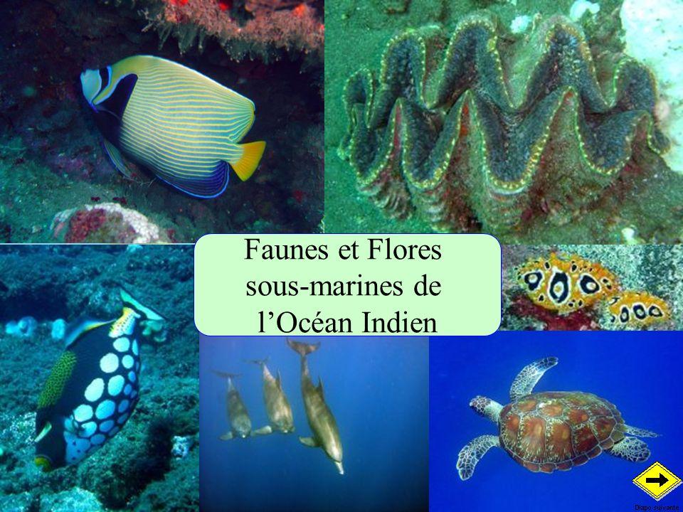 Faunes et Flores sous-marines de lOcéan Indien