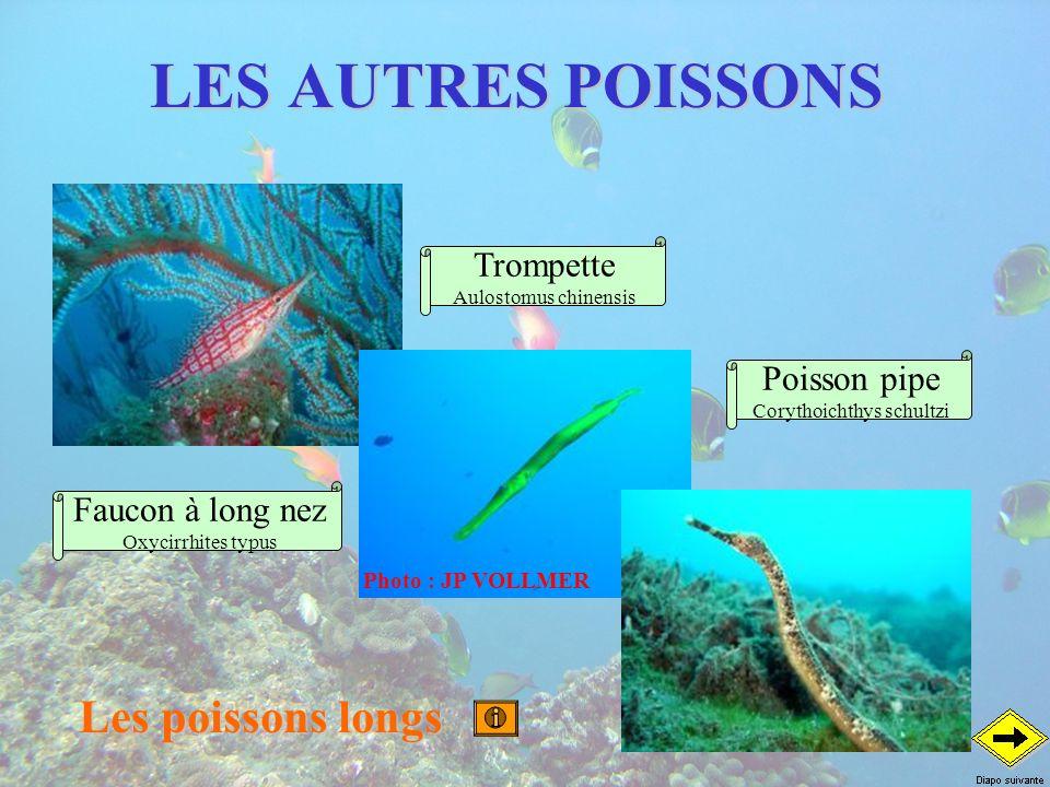 LES AUTRES POISSONS Les poissons longs Poisson pipe Corythoichthys schultzi Trompette Aulostomus chinensis Faucon à long nez Oxycirrhites typus Photo