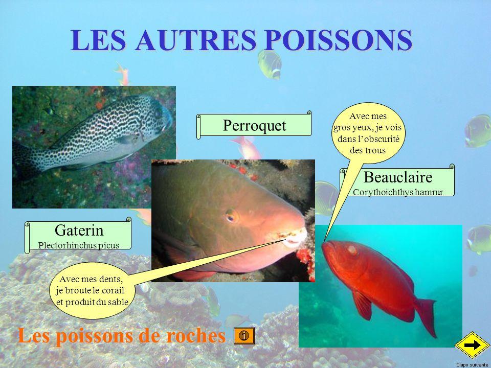 LES AUTRES POISSONS Les poissons de roches Beauclaire Corythoichthys hamrur Perroquet Gaterin Plectorhinchus picus Avec mes gros yeux, je vois dans lo