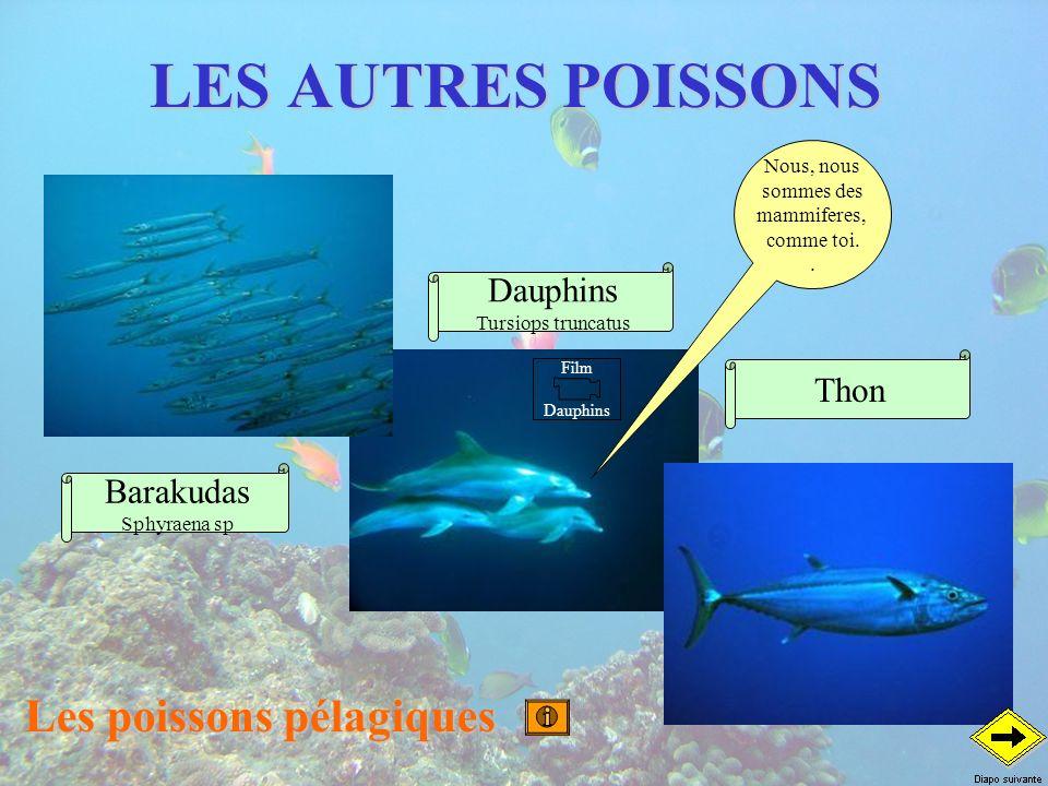 LES AUTRES POISSONS Les poissons pélagiques Thon Dauphins Tursiops truncatus Barakudas Sphyraena sp Nous, nous sommes des mammiferes, comme toi.. Film