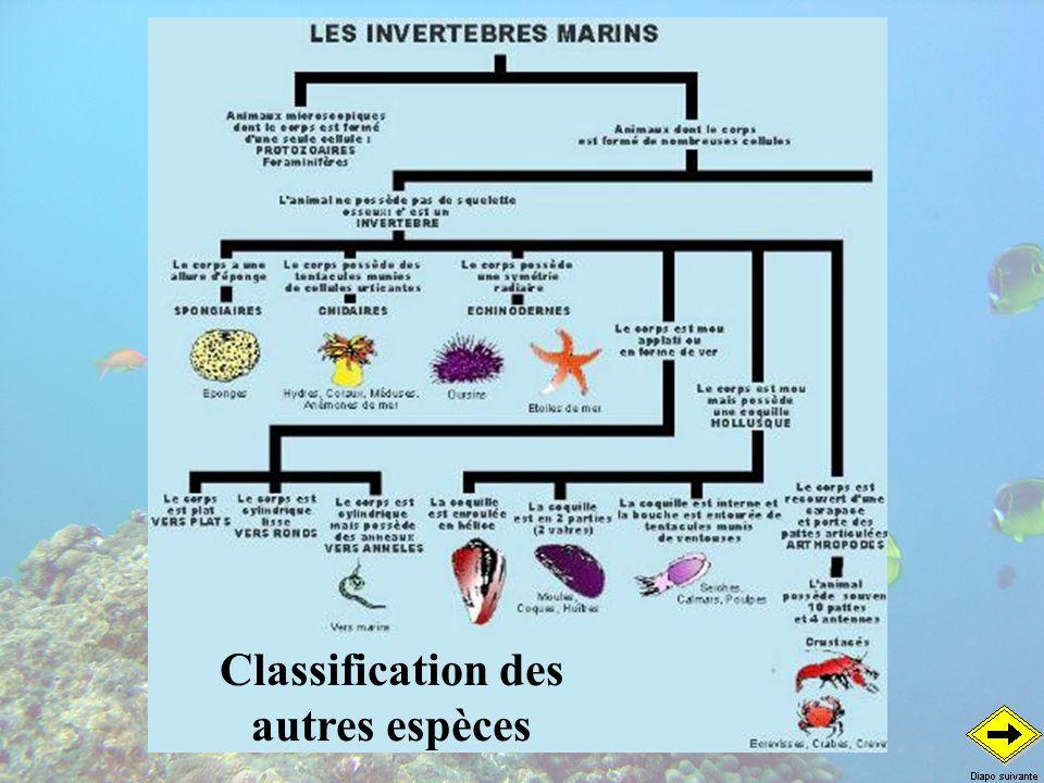 LES CRUSTACES La cigale Arctides regalis La squille Odontodactylus scyllarus La langouste Panulirus longipes