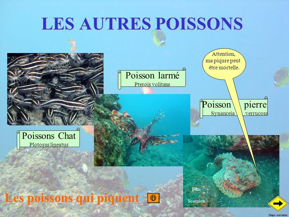LES AUTRES POISSONS Les poissons qui piquent Poisson pierre Synanceia verrucosa Poisson larmé Pterois volitans Poissons Chat Plotosus lineatus Attenti