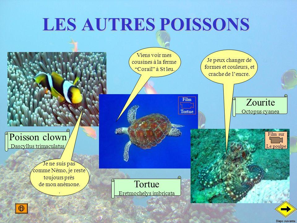 LES AUTRES POISSONS Poisson clown Dascyllus trimaculatus Tortue Eretmochelys imbricata Zourite Octopus cyanea Je peux changer de formes et couleurs, e