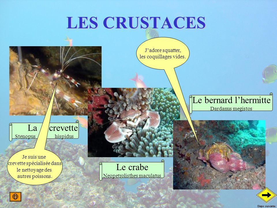 LES CRUSTACES La crevette Stenopus hispidus Le crabe Neopetrolisthes maculatus Le bernard lhermitte Dardanus megistos Je suis une crevette spécialisée
