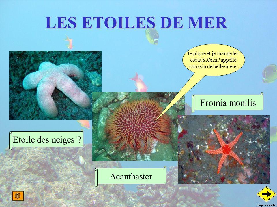 LES ETOILES DE MER Etoile des neiges ? Je pique et je mange les coraux.On mappelle coussin de belle-mere. Acanthaster Fromia monilis