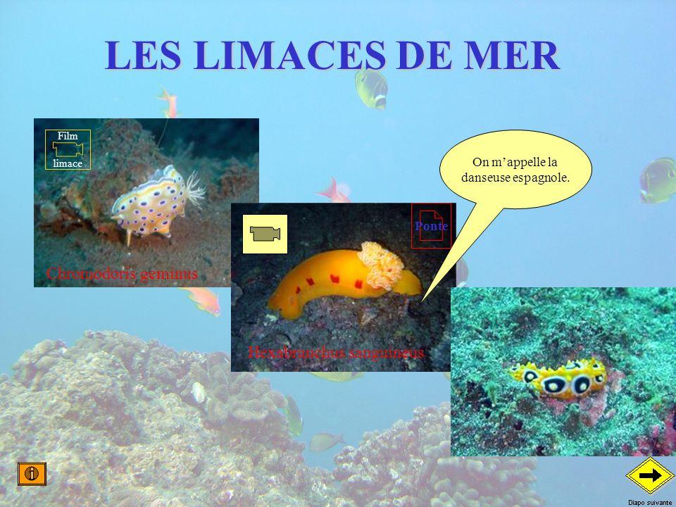 LES LIMACES DE MER On mappelle la danseuse espagnole. Chromodoris geminus Hexabranchus sanguineus Film limace Ponte