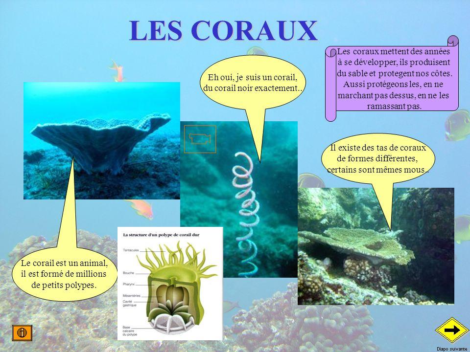 LES CORAUX Eh oui, je suis un corail, du corail noir exactement.. Le corail est un animal, il est formé de millions de petits polypes. Il existe des t