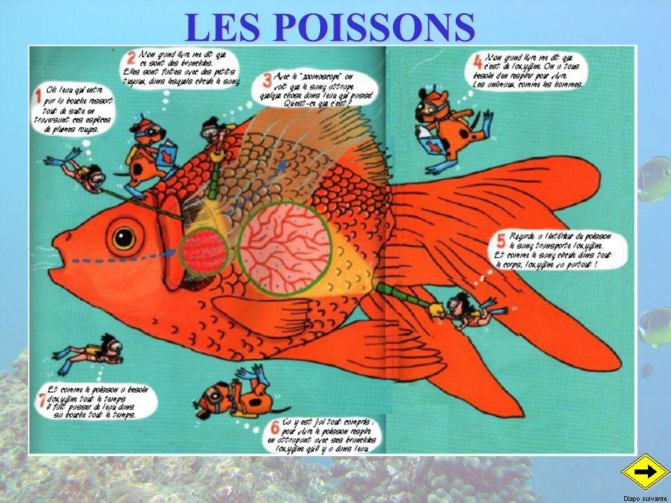 LES AUTRES POISSONS Les poissons de roches Beauclaire Corythoichthys hamrur Perroquet Gaterin Plectorhinchus picus Avec mes gros yeux, je vois dans lobscurité des trous Avec mes dents, je broute le corail et produit du sable