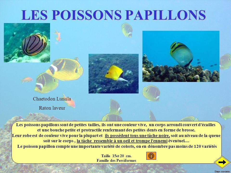 LES POISSONS PAPILLONS Les poissons papillons sont de petites tailles, ils ont une couleur vive, un corps arrondi couvert d'écailles et une bouche pet
