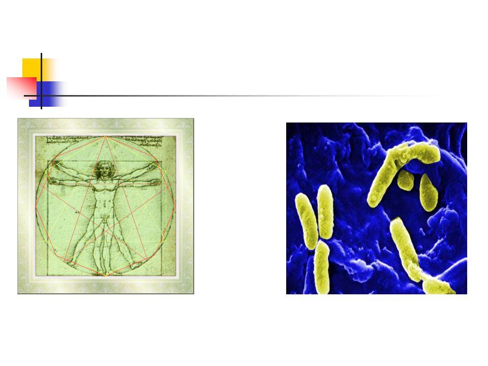 35 patients ventilés Pneumonie à P.aeruginosa Production de Protéines Issues du système de sécrétion de type III +27/35 -8/35 22 Sévère5 Modérées3 Sévères5 Modérées (81%)(19%)(38%)(62%) ExoU : 10/35 (29%) associée à 90% de formes sévères (Hauser et al, Crit Care Med 2002)