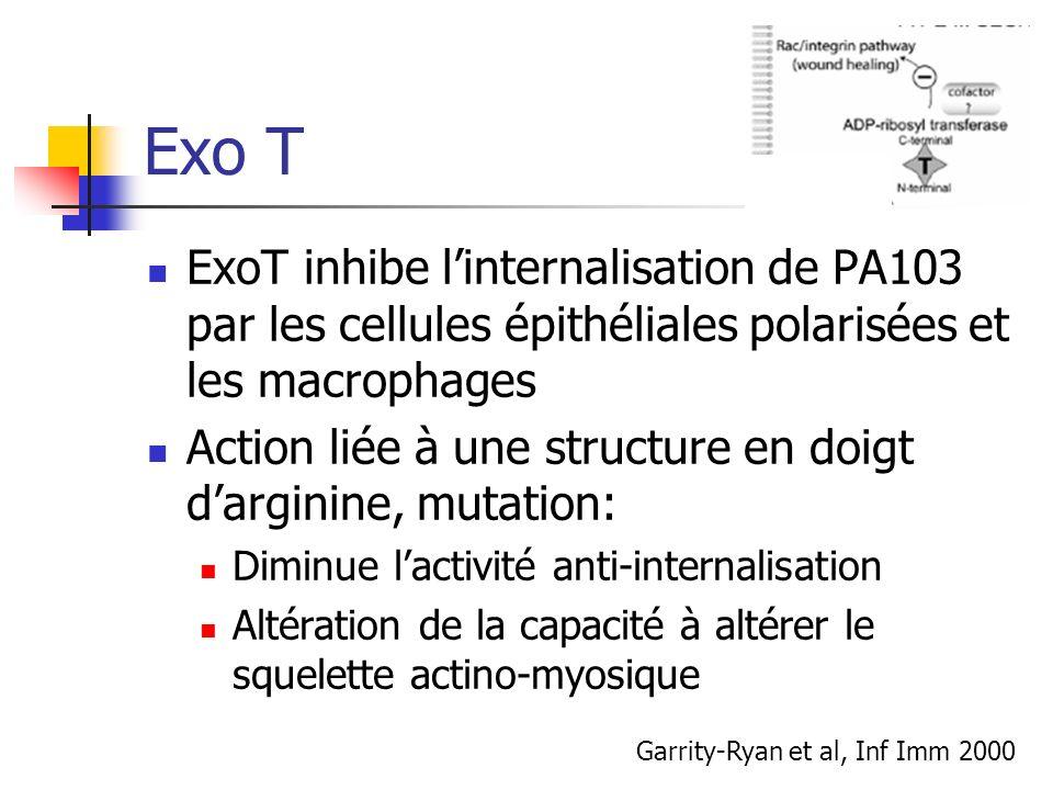 Exo T ExoT inhibe linternalisation de PA103 par les cellules épithéliales polarisées et les macrophages Action liée à une structure en doigt darginine