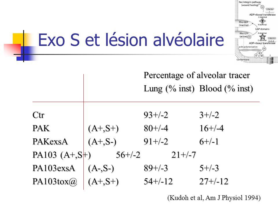 Exo S et lésion alvéolaire Percentage of alveolar tracer Lung (% inst)Blood (% inst) Ctr93+/-23+/-2 PAK (A+,S+)80+/-416+/-4 PAKexsA (A+,S-)91+/-26+/-1