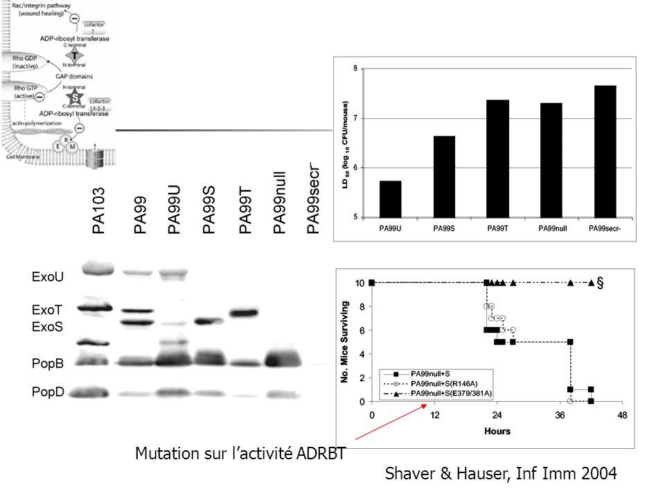 Shaver & Hauser, Inf Imm 2004 Mutation sur lactivité ADRBT