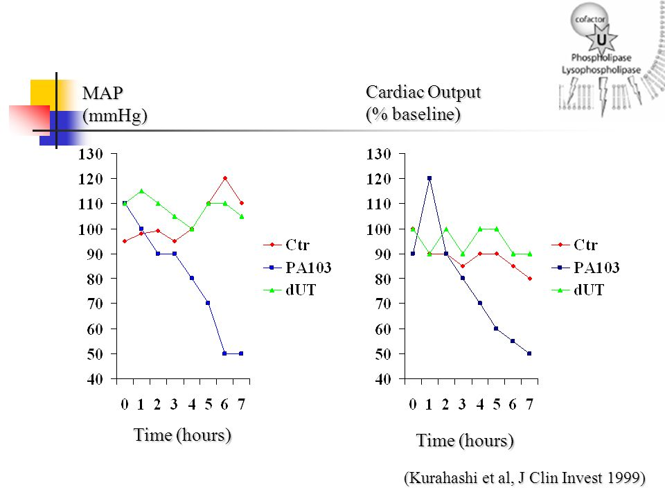 MAP(mmHg) Cardiac Output (% baseline) Time (hours) (Kurahashi et al, J Clin Invest 1999)