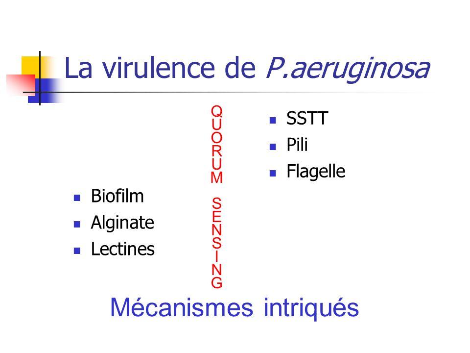 La virulence de P.aeruginosa Biofilm Alginate Lectines SSTT Pili Flagelle Mécanismes intriqués QUORUMSENSINGQUORUMSENSING