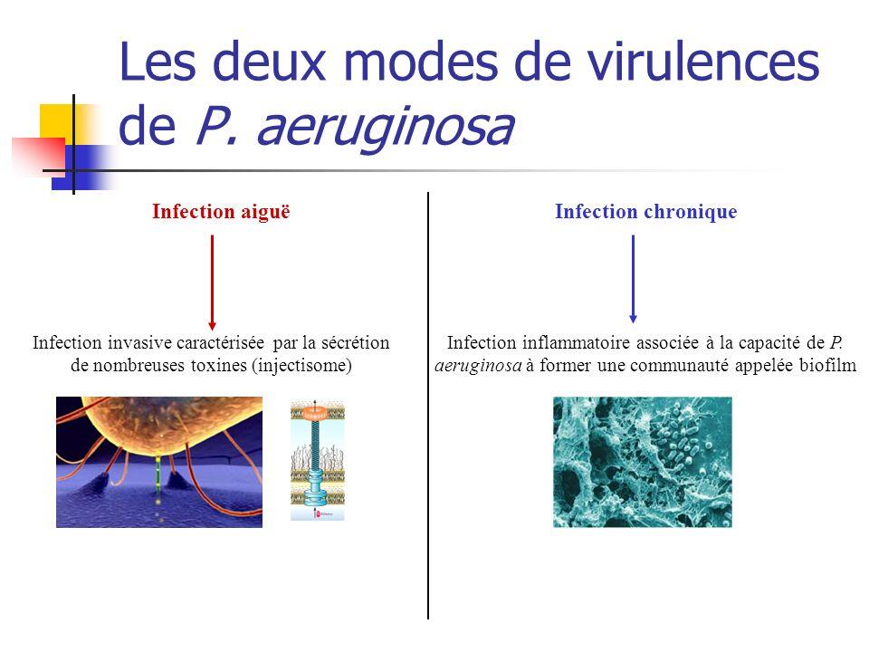 Colonisation initiale Étape infectieuse Infection aiguë Infection chronique Le choix Les deux modes de virulences de P.
