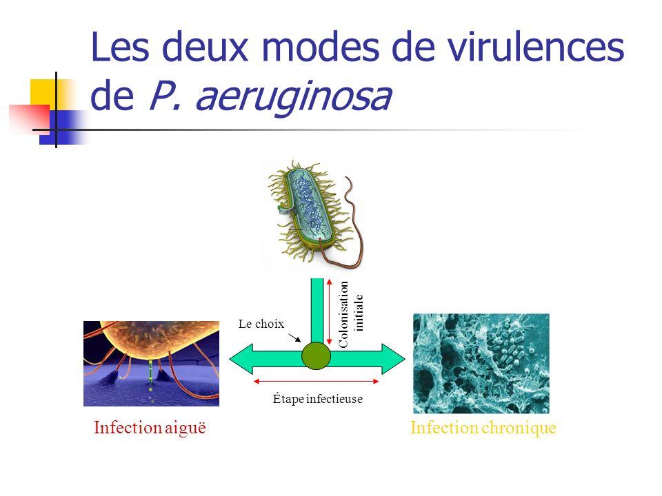 Sonawane et al, Inf Imm 2006 Capacité à former un biofilm