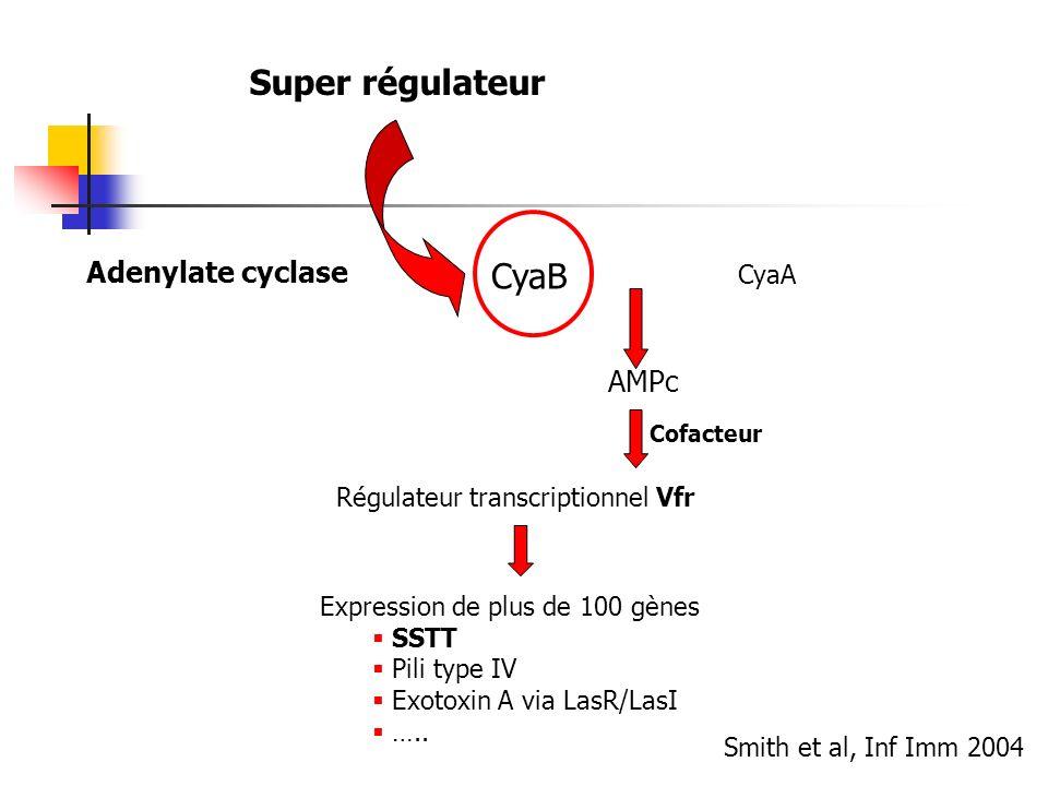 Adenylate cyclase CyaB CyaA AMPc Régulateur transcriptionnel Vfr Expression de plus de 100 gènes SSTT Pili type IV Exotoxin A via LasR/LasI ….. Cofact