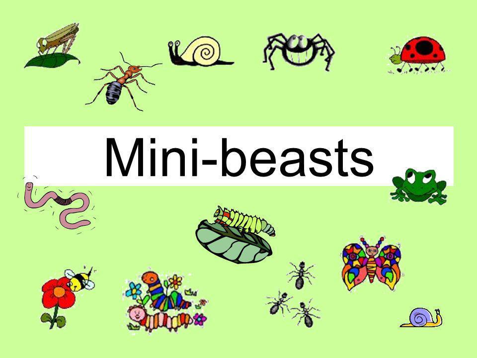 une chenille un verune araignée un escargot un papillon une fourmi click on picture to reveal une coccinelle