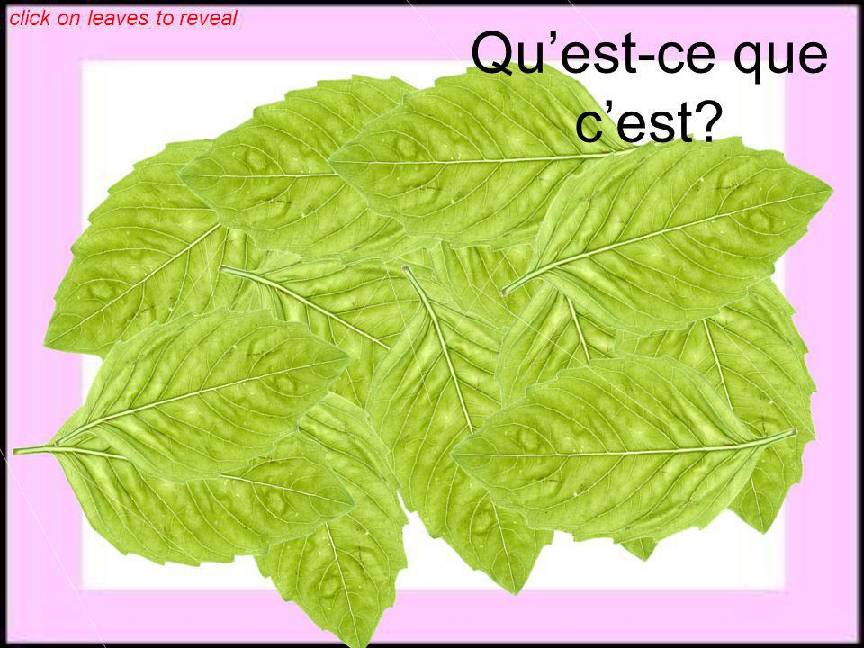 click on leaves to reveal Quest-ce que cest?