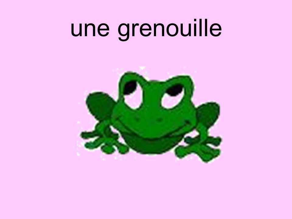 une grenouille