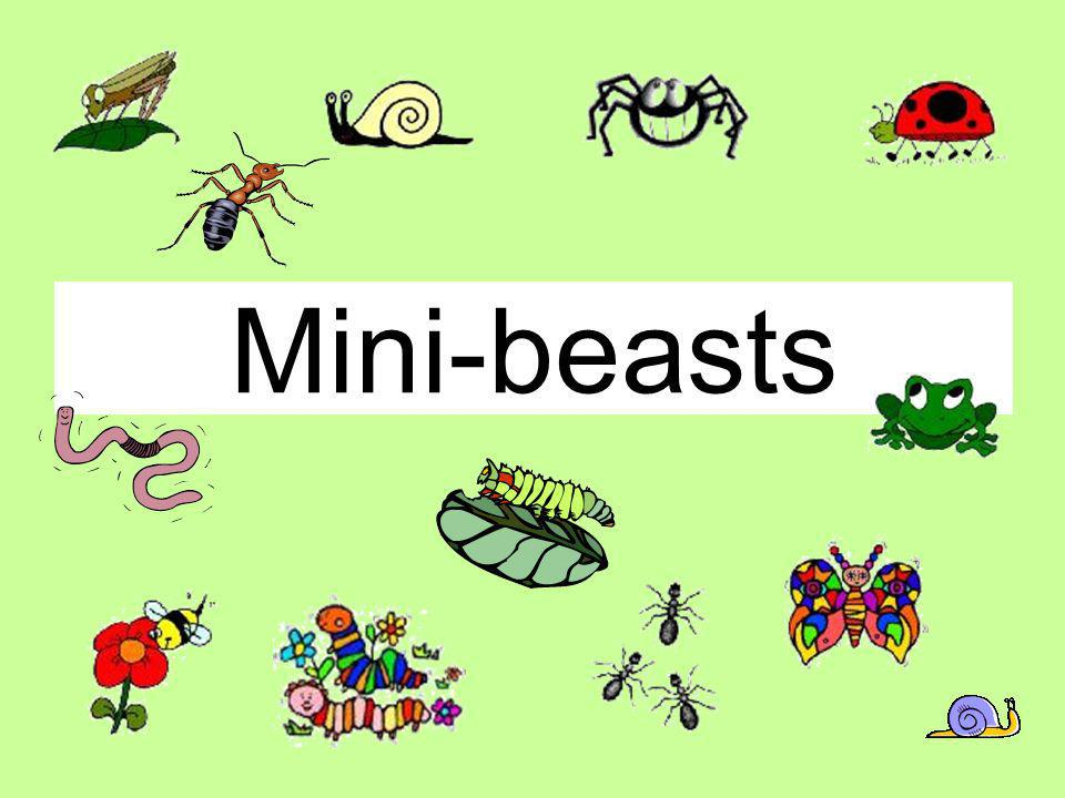 Mini-beasts