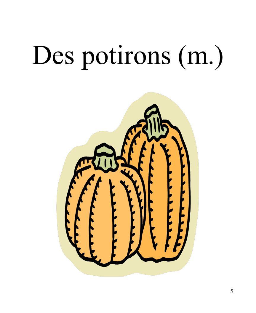 5 Des potirons (m.)