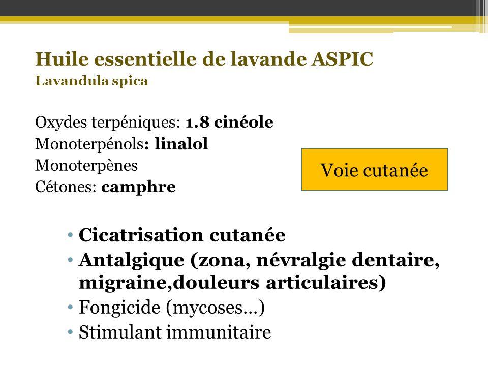 Huile essentielle de lavande ASPIC Lavandula spica Oxydes terpéniques: 1.8 cinéole Monoterpénols: linalol Monoterpènes Cétones: camphre Cicatrisation