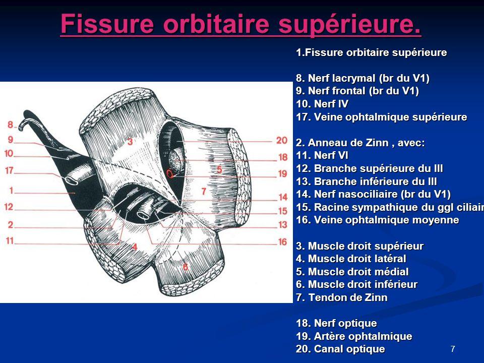 48 Généralités lames cutanéo-musculo-membraneuses mobiles recouvrent et protègent la partie antérieure du globe.