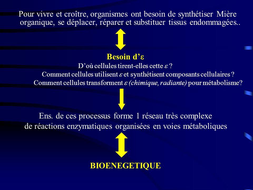 Vivant (cellules et organismes) = machines, sièges de : – Transformations ou dutilisation d – Synthèse des biomolécules : anabolisme (biogenèse) – Dégradation des biomolécules : catabolisme Métabolisme (cellule, tissu, organe,..